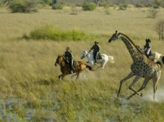 African Horse Safari