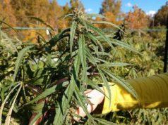 Starting your own hemp farm
