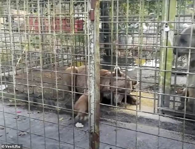 11 year old Russian boy mauled to death by two brown bears Sochi zoo