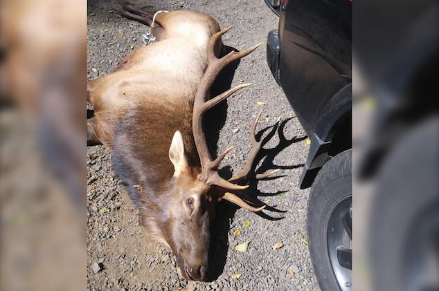 Mark David Hillsboro, Oregon hunter