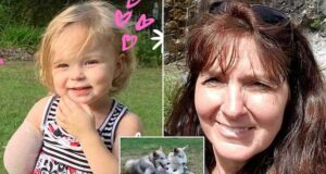 Sophia Scraver Michigan 2 year old girl arm ripped off wolf dog