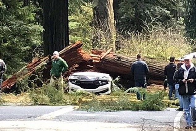 Yreka Ca couple killed by falling redwood tree