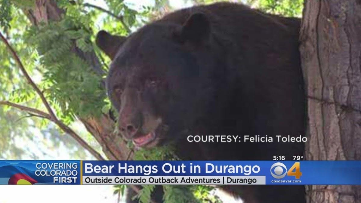 Durango black bear attack