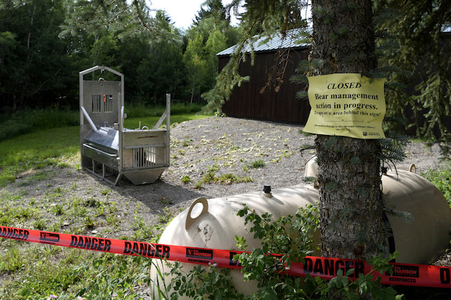 Montana grizzly bear shot & killed after fatal attack Lean Lokan Davis