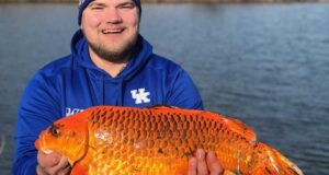 Giant Goldfish in Minnesota