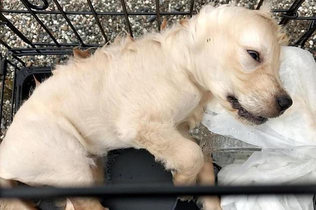 NJ woman drowns puppy dog