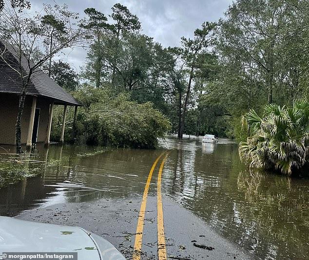 Timothy Satterlee Louisiana alligator attack