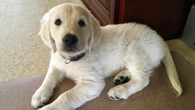 Bringing new puppy home